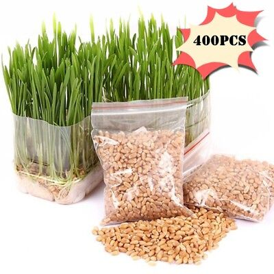 400PCS/Pack Green Wheatgrass Wheat Grass Seeds For Sprouting Pets Health
