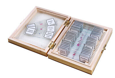 OPTICON Microscope Prepared Slides - 25pcs ANATOMY