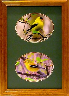Goldfinch Photo Collage Signed & Numbered Giclee Prints By The Photographer LOOK