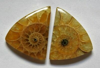 26.50 Cts Natural Ammonite (22.4mm X 18.6mm each) Loose Cabochon Match Pair