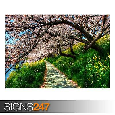 NATURE POSTER Photo Picture Poster Print Art A0 A1 A2 A3 A4 AE005 BLOSSOM