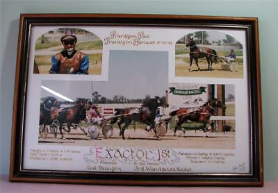 1st Place 'Exactor' Harness Horse Racing Traralgon Framed Photos Trots   SirH70