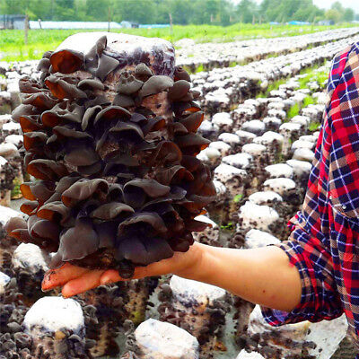 Mushroom Seeds Vegetable Mushroom Seeds Mushroom Vegetables Seeds 200Pcs