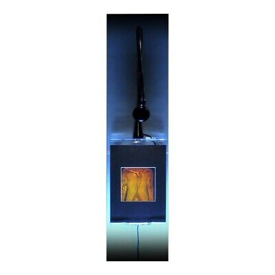 Torso 2-Channel Anotomically Correct Hologram LIGHTED WALL MOUNT, Photopolymer