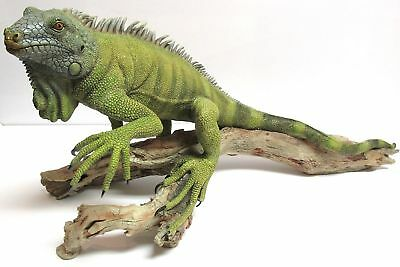 """Retired Extremely Rare Iguana 20"""" NEW In Original Box Country Artists CA02314"""