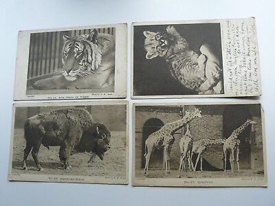 4 x Zoo Animals Postcards