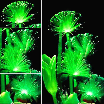 Emerald Fluorescent Flower seeds, Pearl Plants Aquarium Grass Seed Ornamental
