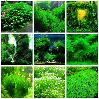 Water Grass Aquatic Plant Mix Seeds Aquarium Plants Seed Grass Indoor Ornamental