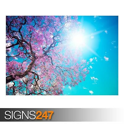 EARTH TREE (AE046) NATURE POSTER - Photo Picture Poster Print Art A0 A1 A2 A3 A4