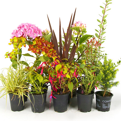 5 X Mixed Garden Plants - High Quality Established Plants in Pots UK Grown