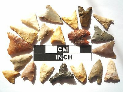 20 x Triangle Style Neolithic Arrowheads - 4000BC - (988)