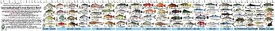 QLD Fishing Guide & Ruler Decal Sticker