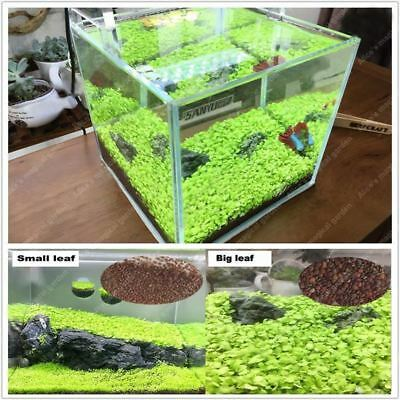 1000pcs aquarium aquatique eau Plante Herbe graines décoration aquarium