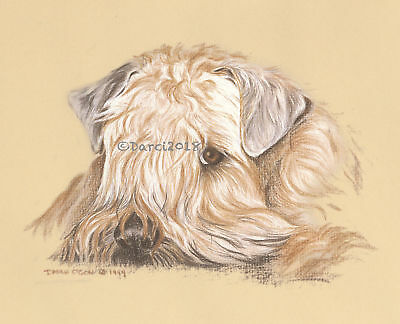 Wheaten Terrier  The Look note cards
