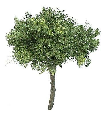 1/72 scale realistic handmade model tree grasses leaves. TNTS-004