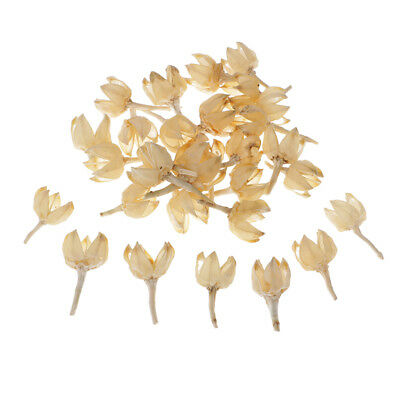 30 Real Natural Rose Hips Dried Flowers Rustic Floral for Home Wedding Decor