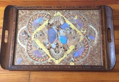 """Vtg Butterfly Art Inlaid Wood Serving Tray Glass Cover 24.5"""" x 15 1/4"""""""