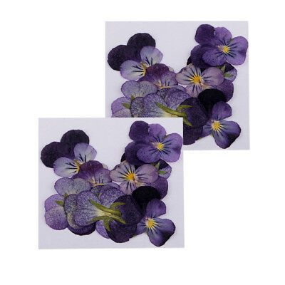 24x Natural Violet Real Dried Flowers Embellishments for Craft DIY Nail Art