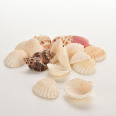 Sea Shells Shell Craft Aquarium Beach SeaShells Mixed Randomly Gift IBestRU