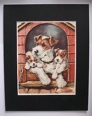Dog Fox Terriers Print Winifred Martin Mom Pups Doghouse Bookplate 1950s Matted