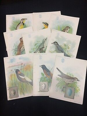 9 SINGER SEWING MACHINE Advertising Cards~American Song Birds 1898 Trade Cards