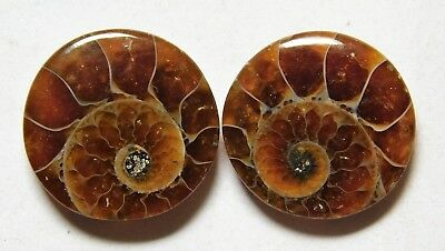 14.60 Cts Natural Ammonite (15.7mm X 15.3mm each) Loose Cabochon Match Pair A14