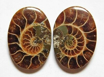 28.55 Cts Natural Ammonite (23.3mm X 16.3mm each) Loose Cabochon Match Pair A26