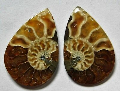 22.95 Cts Natural Ammonite (27mm X 18mm each) Loose Cabochon Match Pair