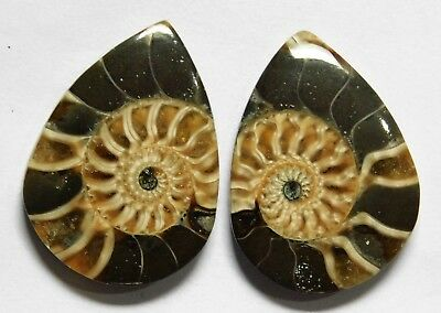 52.30 Cts Natural Ammonite (30mm X 22mm each) Loose Cabochon Match Pair