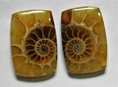 26.30 Cts Natural Ammonite (21mm X 14mm each) Loose Cabochon Match Pair