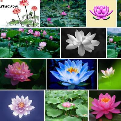 New Nice Adorable Flower Fragrant Blooms Colorful Lotus Seeds B44G 04