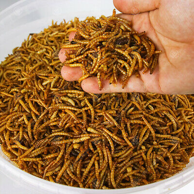 Dried Mealworms - Premium Wild Bird Food Large Chubby Worms