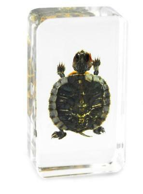 Tortoise embedding specimen paperweight resin collection amber