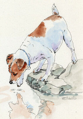 JACK RUSSELL TERRIER Original Watercolor on Ink Print Matted 11x14 Ready 2 Frame
