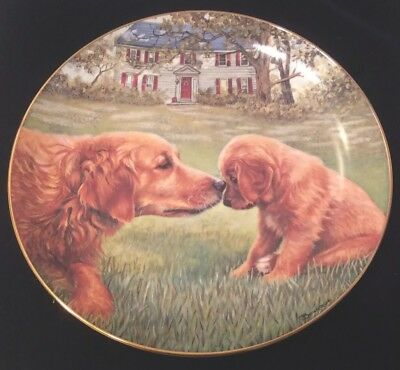Golden Moment - Golden Retriever Plate - Patricia Bourque - Danbury Mint EUC