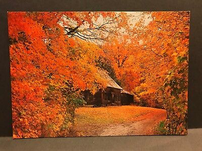 Postcard Autumn colors from the old Homestead New England Maine unposted NES35