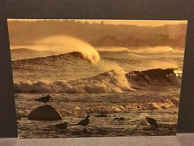 Postcard Moody Beach at dusk, Seagulls and Breaking Waves Maine unposted MS354