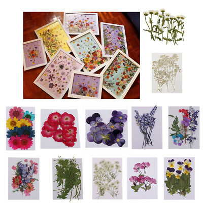 Variety Natural Dried Flowers Pressed Leaves Craft DIY Jewelry Making Phone Case