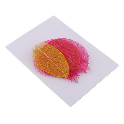 20 Pieces Pressed Dried Linden Leaves Bodhi Leaf for Art Craft Scrapbooking