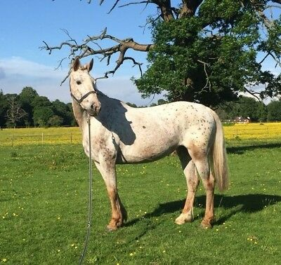 Sweet mare with potential for sale