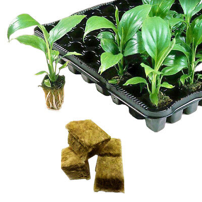 NEW 1 Starter hydroponic rockwool Cubes Grow media Plugs Grodan Bulk Qty