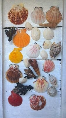 25 x Drilled Shells Assorted Seashells Crafts Jewellery Design 2-5cm