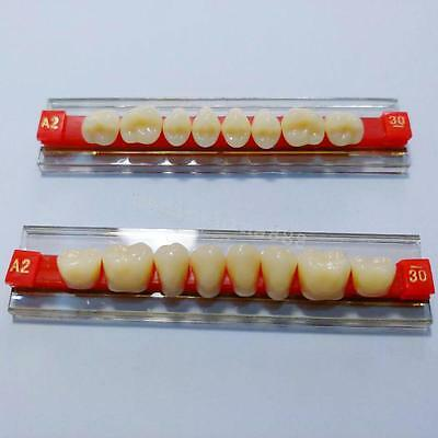Acrylic Resin Denture Dental Teeth Shade A2 A3 For oral tooth loss posterior