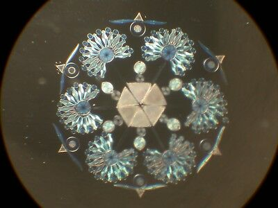 Exhibition Rosette Microscope slide 270 Diatoms