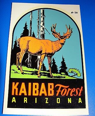 Vintage 1970's Souvenir Travel Decal of KAIBAB FOREST, ARIZONA -Buck Deer #A-30