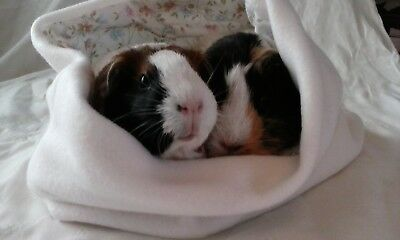 Chucklebunnies Guinea Pig snuggly cuddle bed pocket for 2 recycled fabric cream