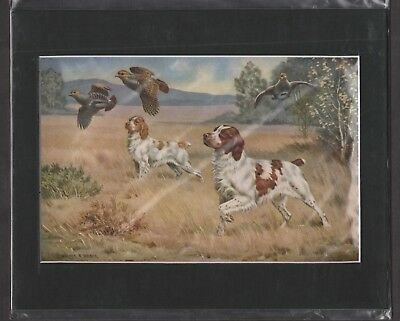 BRITTANY SPANIELS Hunting Dogs Picture MATTED Ready to Frame!! 8 x 10