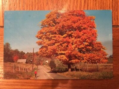 Postcard Unused New Jersey-Pennsylvania--A Typical Autumn Afternoon