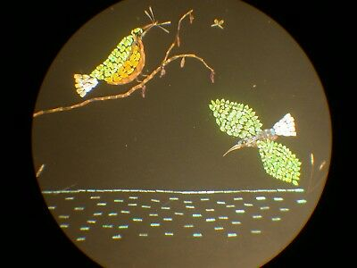 Exhibition Microscope slide of Butterfly scales as Kingfishers after Dalton
