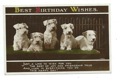 Best Birthday Wishes Puppies Scottie Dogs Art Photo Real Postcard C1934